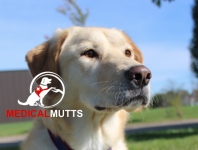Medical Mutts Overview