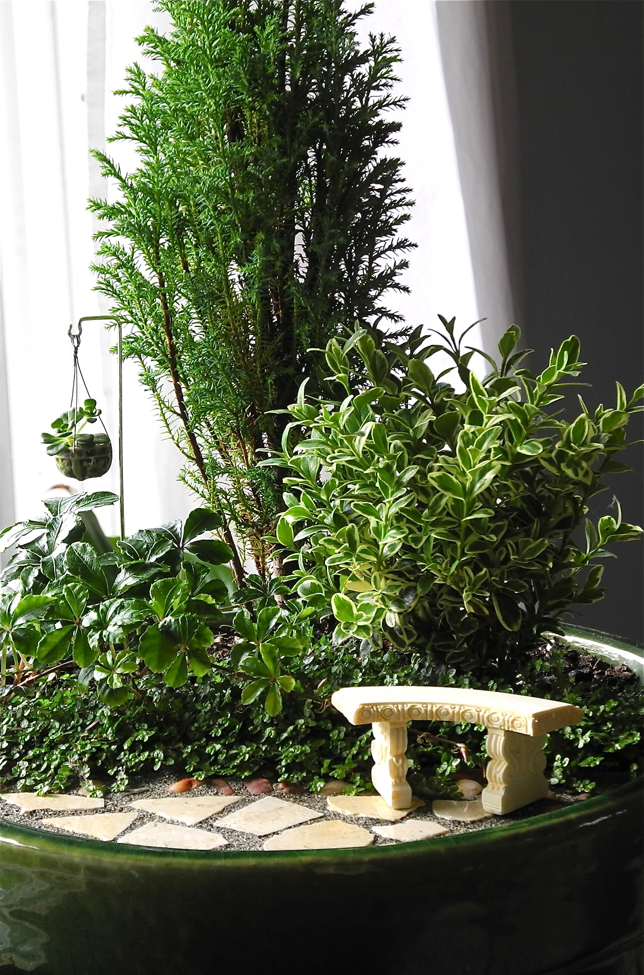 Biggest trend grows into a new hobby - Miniature plants for fairy gardens ...