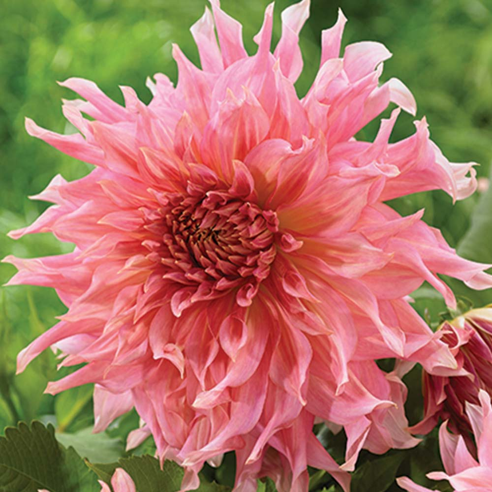 Home Grown Flower Arrangements Made Easy With Spring Planted Bulbs