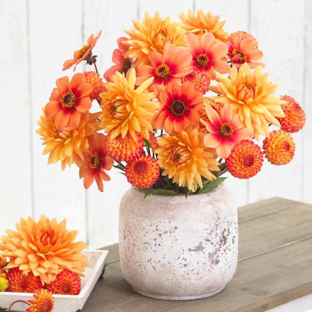Home grown flower arrangements made easy with spring planted bulbs creating beautiful flower arrangements has never been easier this custom mix includes three different types of dahlias each with its own unique look izmirmasajfo