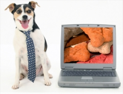 Jack Russell Software Offers Free Accounts on JackFile.com