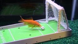 R2 Solutions Creators of the R2 Fish School Kit are Searching for the Next Great, Trained Fish