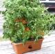 The Garden Patch Grow Box