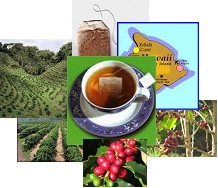 Innovance LLC Introduces New Coffee Cherry Herbal Tea, Double the Antioxidants, Healthier Than Green Tea