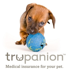 Veterinary Spending Has Grown Almost 10% Since 2009, Says Trupanion