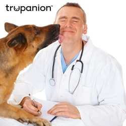 Pet Dentistry: Trupanion Covers Complications with Tooth Eruption and Exfoliation