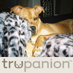 Trupanion Sees First Claim for Javelina Attack