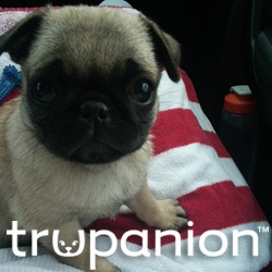 Trupanion Pet Insurance Offers Fourth of July Advice to Pet Owners