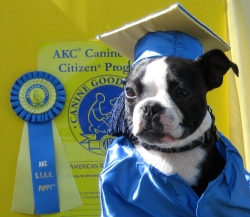 Southern California Canines Become AKC S.T.A.R. Puppies