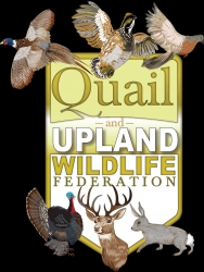 QUWF Strongly Supports Ruffed Grouse Restocking in Missouri