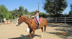 The Mesa Stables Now Provides Horseback Riding Lessons