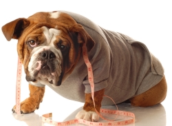 Local Veterinary Hospital Holds Pet Weight Loss Contest
