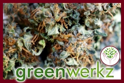 Greenwerkz Releases R4 Ultra-High CBD, Non-Psychoactive Strain as