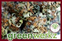 Greenwerkz Releases R4 Ultra-High CBD, Non-Psychoactive Strain as