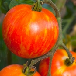 Catalogs.com Reports Top Gardening Trends for Spring 2013