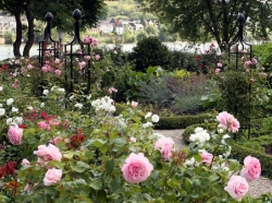 Fine Iron Climbing Structures for Roses - Anniversary: 15 Years Classic Garden Elements