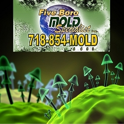 Brooklyn Residents Poisoned by Toxic Mold Growth from Hurricane Sandy Flood Waters?