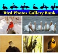 Well Known Bird Photographer, G. Cope Schellhorn, Uses the Internet to Display His Best Bird Photos