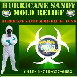 Five Boro Mold Specialist: