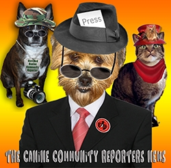 Talking Dog Reporters in Your Community