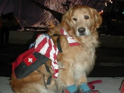Montclair Disaster Relief Canine: Animal Planet Documentary Pays Tribute to Hero Dogs of 9/11 in Documentary Special