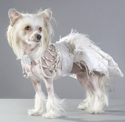 Renowned Designer, Mario Lalibert� of La Maison Vienna Couture Canine Unveiled the Futuristic Royal Dress