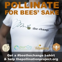 HoneyColony Warns Bee Loss Numbers Worse than Reported by Mainstream as They Continue on Their Mission to Save the Bees