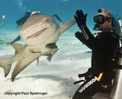 What Would You Like to Know About Sharks? Ask the Shark Experts.