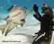 Shark Research Institute