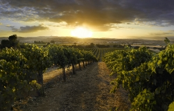 40 Years of Family Winemaking Comes to Arrowhead Grill with Exclusive J. Lohr Dinner, Thursday, Oct. 30