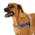 Bark Busters Introduces New Dog Harness - WaggWalker