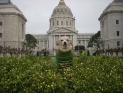 Frida – Dog Mayor of San Francisco