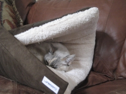 Introducing The CuddleMuff - the Adjustable, Portable, Cozy Muff-Like Pet Bedding That Helps Alleviate Pet Anxiety, Includes Pets in Family Time and Protects Furniture