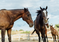 Crisis Situation: 212 Animals Are Losing Their Home. The Clock is Ticking for One of the Largest Equine and Animal Sanctuaries in North America.