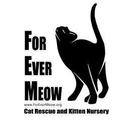 FoEverMeow Awarded Prestigious Best Friends Grant for Kitten Nursery