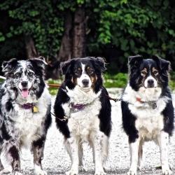 Alden's Kennels Welcomes New Advanced & Intermediate Dog Trainer
