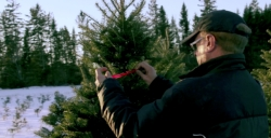 Hilltop Christmas Tree Farms Offering Christmas Tree Delivery Services Nationwide