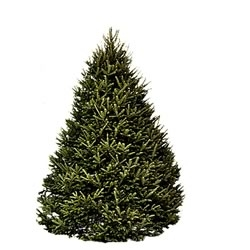 Hilltop Christmas Trees Available for Home Delivery