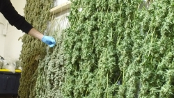 The Big Business of Marijuana Growing Exposed in a New Series