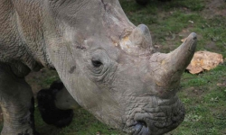 New Social Platform, IamAction.com, Offering $25,000 Reward to Help Find French Rhino Poachers