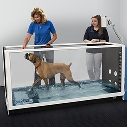 Hudson Aquatic Systems Expands Canine Aquatic Therapy Underwater Treadmill Product Line