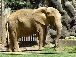 Elephant Aid International (EAI) Working with Puerto Rico Government to Retire Zoo Elephant to Georgia, USA, Refuge