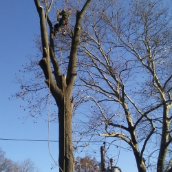 New York Long Island Tree Service Brings a Redefined Experience to Garden, Flowers and Trees Unlike Any Other Company