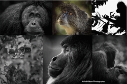 "Twinpanzee 4 Chimpanzees! Twinpanzee Brewing Co & Kristi Odom Photography to Host ""Primates 4 Primates"" Fundraiser for Liberia Chimpanzee Rescue & Protection Feb 11, 2018"