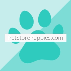 Pet Stores Are the Most Humane Source of Puppies According to PetStorePuppies.com