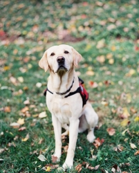 Council Releases Statement on Behalf of Service Dogs by Warren Retrievers Regarding Allegations