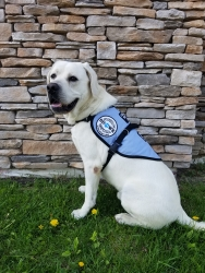Custom Trained Autism Service Dog Delivered to 5-Year-Old Boy in Kingston, Ontario