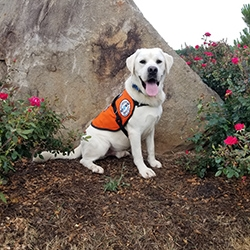 Diabetes Service Dogs Wisconsin