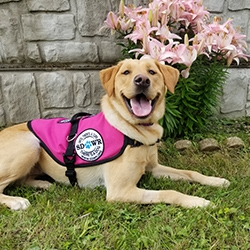 Diabetic Alert Dog Delivered to 15-Year-Old Girl with Type 1 Diabetes in Rockford, IL