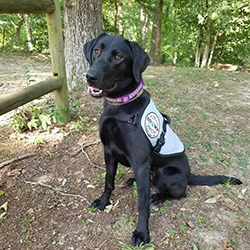 Diabetic Alert Dog Delivered to 6-Year-Old Girl with Type 1 Diabetes Mellitus in Chestertown, MD